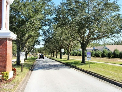 Orange Tree Clermont Florida