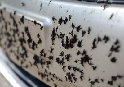 How to Remove Lovebugs From Your Car